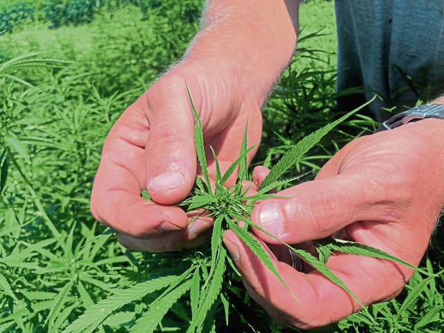 Pennsylvania hemp industry remains uncertain as harvest approaches